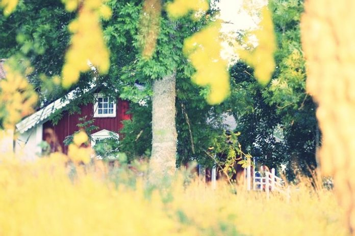 Russian country cottage dacha in summer
